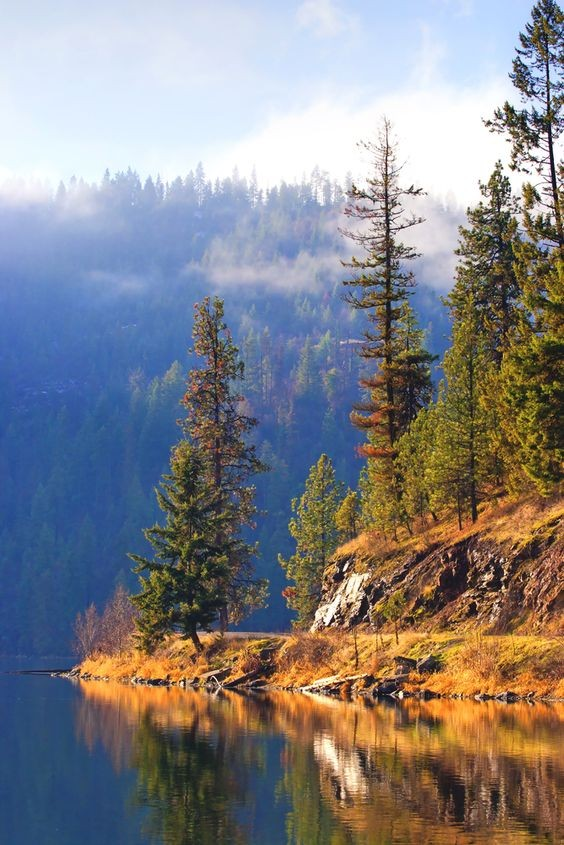 森林心理測驗