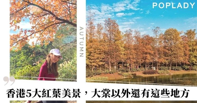 【香港紅葉2020】5大紅葉打卡美景,大棠以外還有這些地方!(附路線及交通詳情)