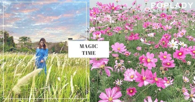 【2021香港IG打卡】假日影相好去處!絕美波斯菊花海、媲美芒草的白茅草原