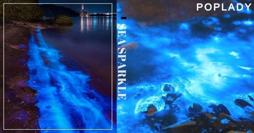 香港再現世界奇景「藍眼淚」!追淚打卡熱點推薦:大埔三門仔、大尾篤