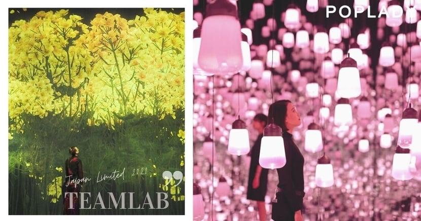 探索東京台場teamLab Borderless春日花期限定,走進滿滿櫻花、油菜花與牡丹的絕美花海