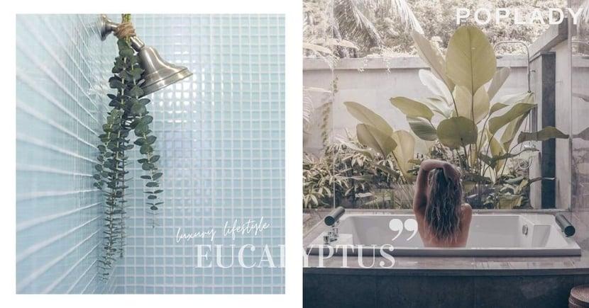 週末來一次Home SPA:尤加利葉散發如松木般的香氣,在家享受超療癒的沐浴時光