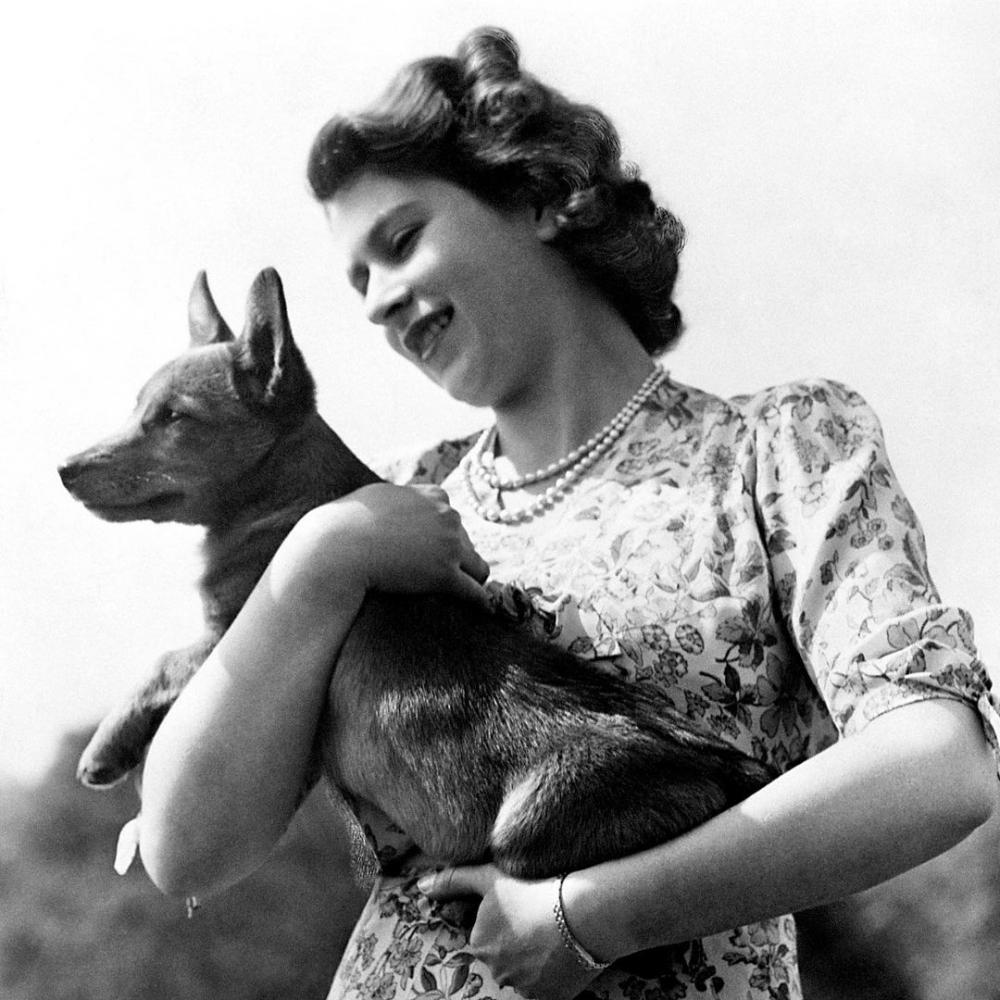 此生至少擁有30隻歌基犬的愛狗人士—英國女皇