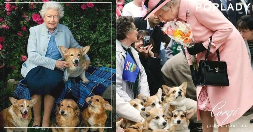 英女王的哥基寶寶Fergus步上菲臘親王的腳步:視狗如命的女王,此生至少擁有30隻哥基犬