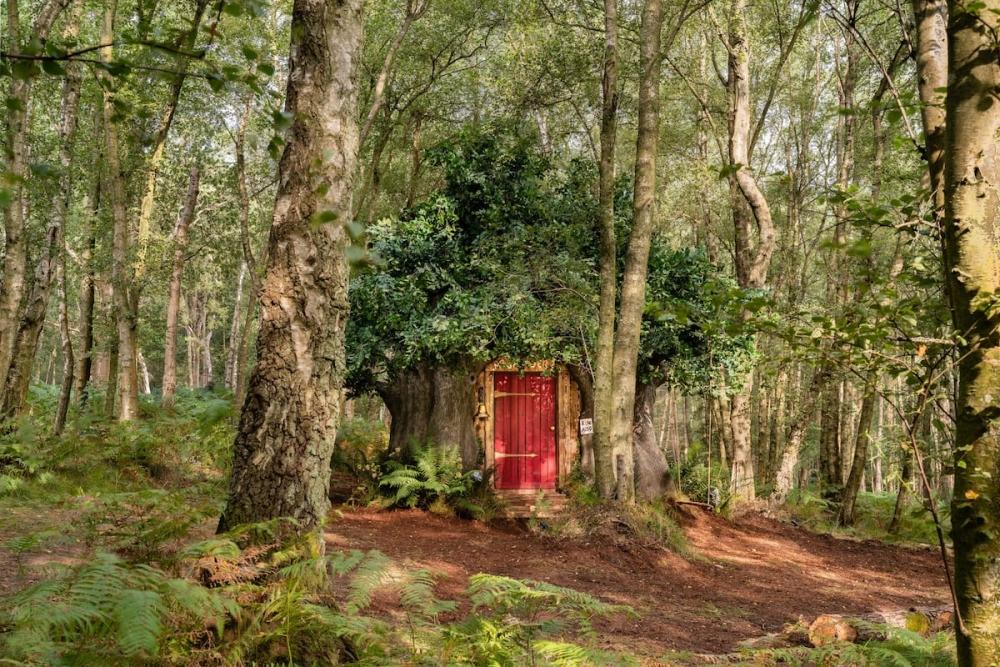 在倫敦的小熊維尼樹屋,讓人掉進童話故事之中