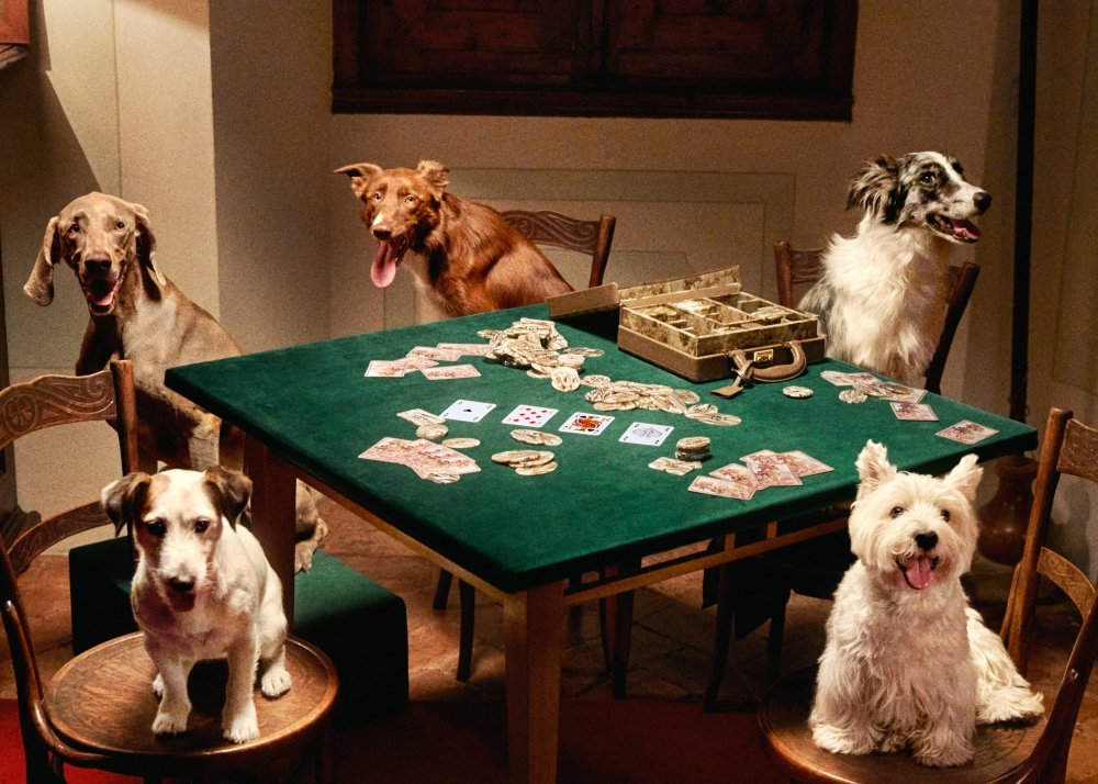 Gucci狗狗玩撲克牌